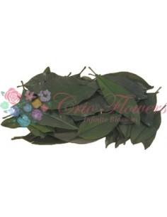 Frunze Magnolie Criogenate Verde