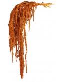Amaranthus Stabilizat Premium Portocaliu
