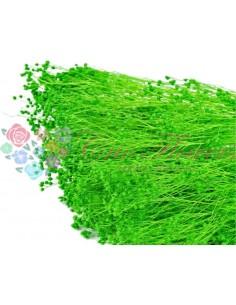 Broom Criogenat Verde Deschis