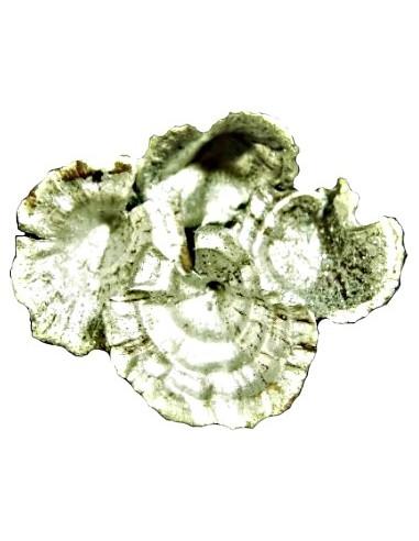 Ciuperci Decorative Argintiu