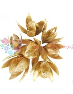 Wild Lily Bronze