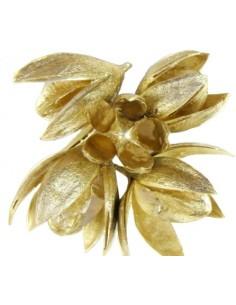 Wild Lily Auriu