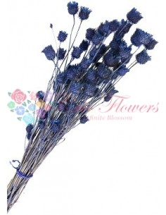 Flori Capsuni Albastru