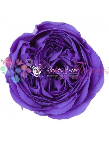 Trandafiri Criogenati Mov Deschis Kabuky Per6Vio01