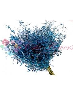 Statica Tatarica Criogenata Albastru
