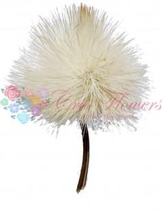 Floare Anghinare Natur